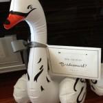 Solo swan